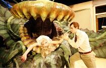 LITTLE SHOP OF HORRORS   music: Alan Menken   book & lyrics: Howard Ashman   ,director: Matthew White              based on the film by Roger Corman   screenplay: Charles Griffith,Sheridan Smith (Audr...