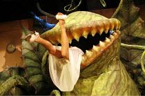 LITTLE SHOP OF HORRORS   music: Alan Menken   book & lyrics: Howard Ashman   director: Matthew White,based on the film by Roger Corman   screenplay: Charles Griffith,^Audrey II^ swallows Audrey (Sheri...