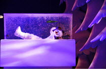 THE SNOWMAN   based on the story by Raymond Briggs   music & lyrics: Howard Blake   design: Ruari Murchison   director: Bill Alexander <br>,Snowman chills out in the deep freezer,Birmingham Repertory...