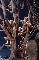 TWELFTH NIGHT  by Shakespeare  set design: Robin Don  costumes: Alex Stone  lighting: David Hersey  director: John Caird <br> ~l-r: Daniel Massey (Sir Andrew Aguecheek), Stanley Page (Fabian), Stephen...