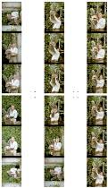 A MIDSUMMER NIGHT'S DREAM  by Shakespeare  design: David Knapman  lighting: Jason Taylor  director: Rachel Kavanaugh ~Ian Talbot (Bottom)  Serena Evans (Titania)  Issy van Randwyck (Helena)~Open Air T...